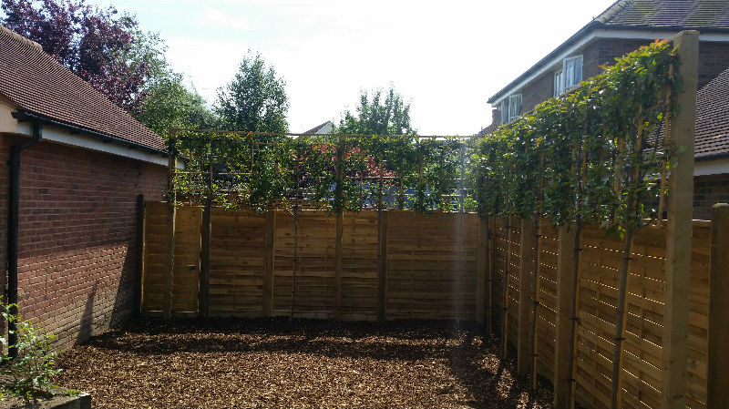 Boundary Fence Saffron Walden Mrs W