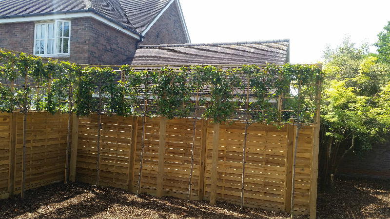 Boundary Fencing Saffron Walden Mrs W