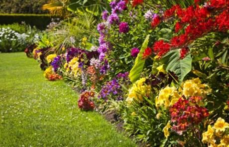 Garden Services Saffron Walden, Cambridge, Bishops Stortford